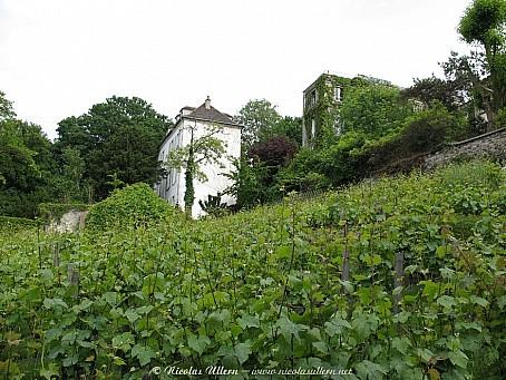 Paris, les vignes de Montmartre